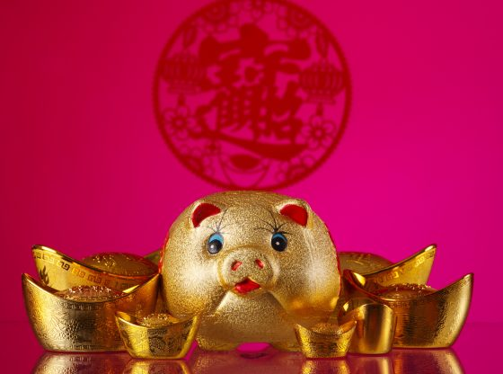 chinese golden pig