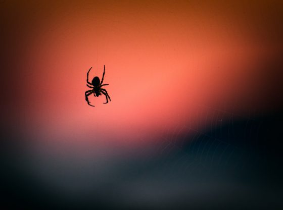 spider silhouette and orange background